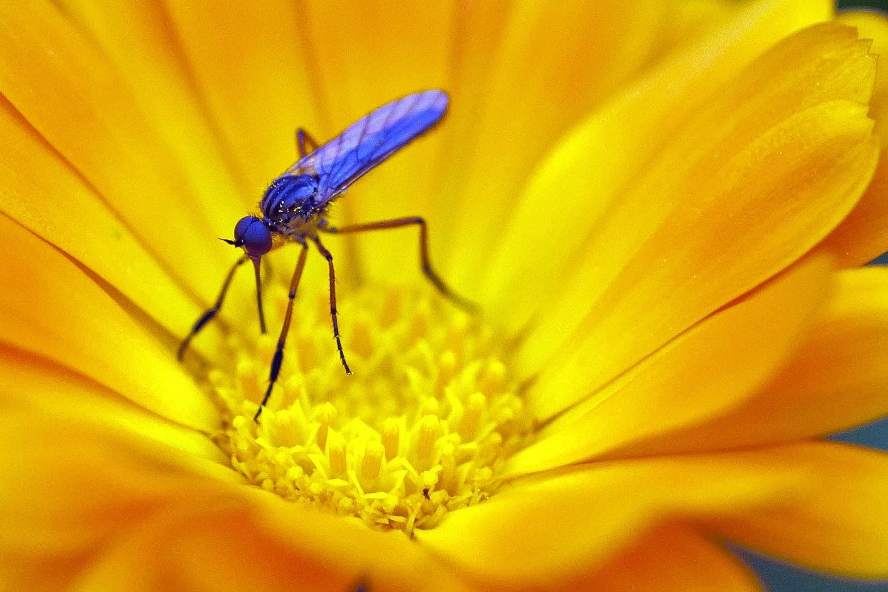 Photograph Yellow - Blue by Inmaculada Rodriguez on 500px