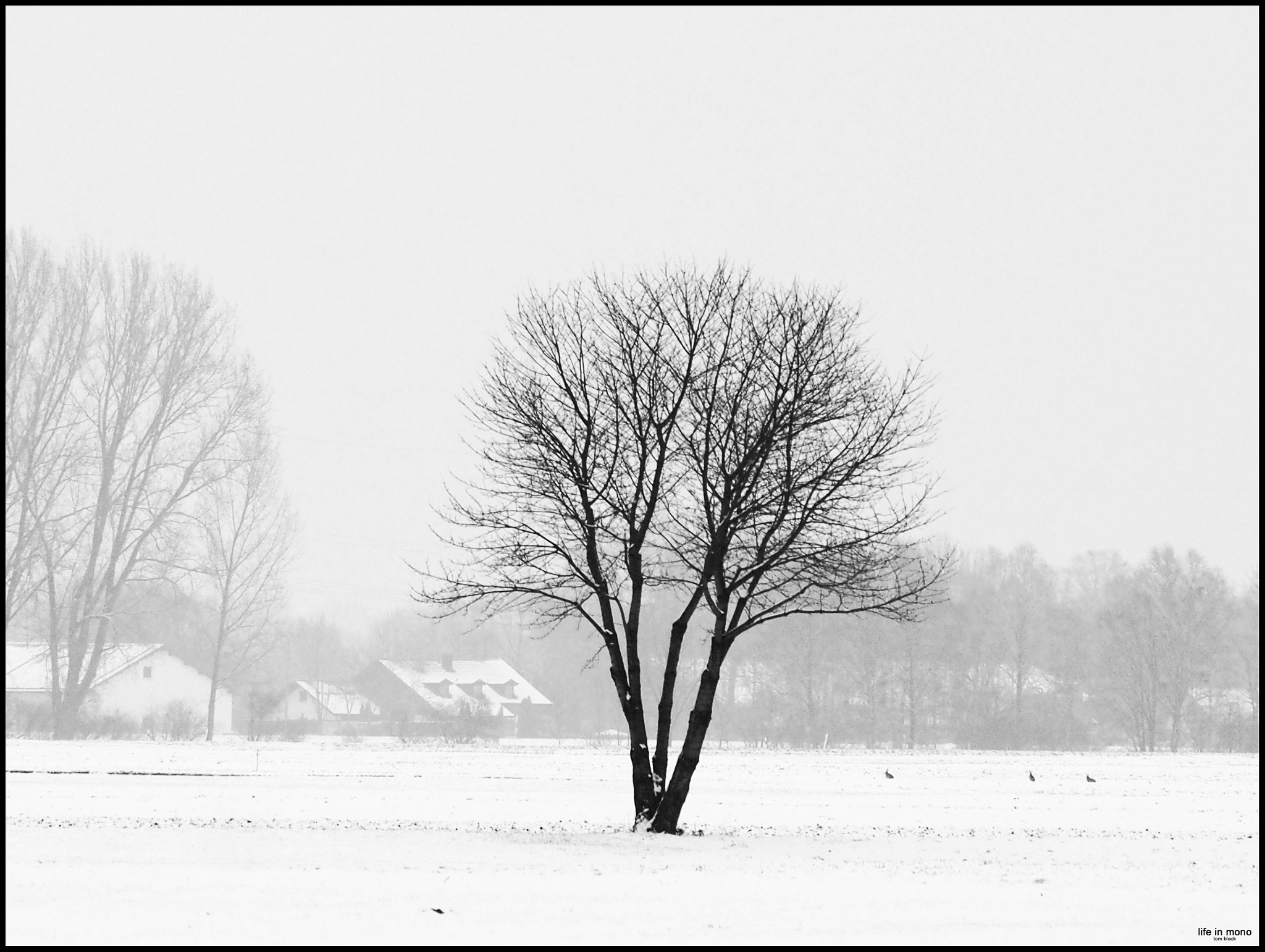 Photograph lost & alone [1] by Tom Ba on 500px