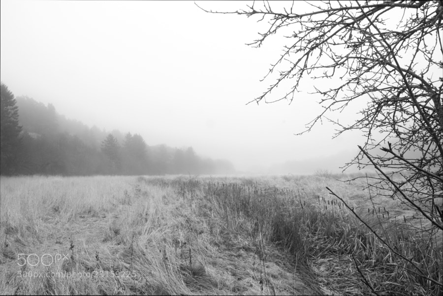 Small empty river by Kristoffer  (fotokoffe)) on 500px.com
