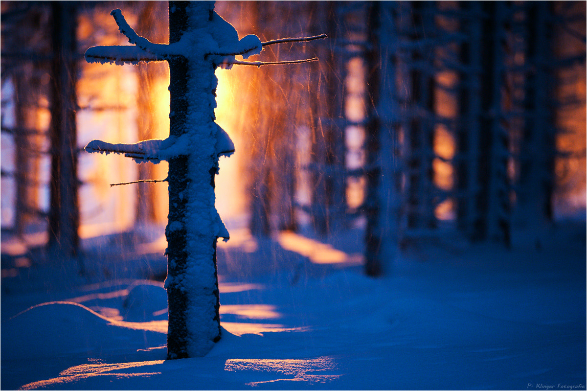 Photograph Warm winter by Philip Klinger on 500px