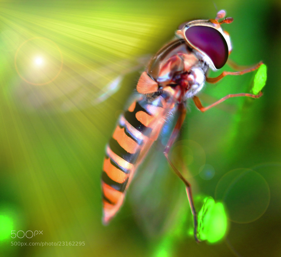 Photograph fly in the sun by Johannes Bauer on 500px