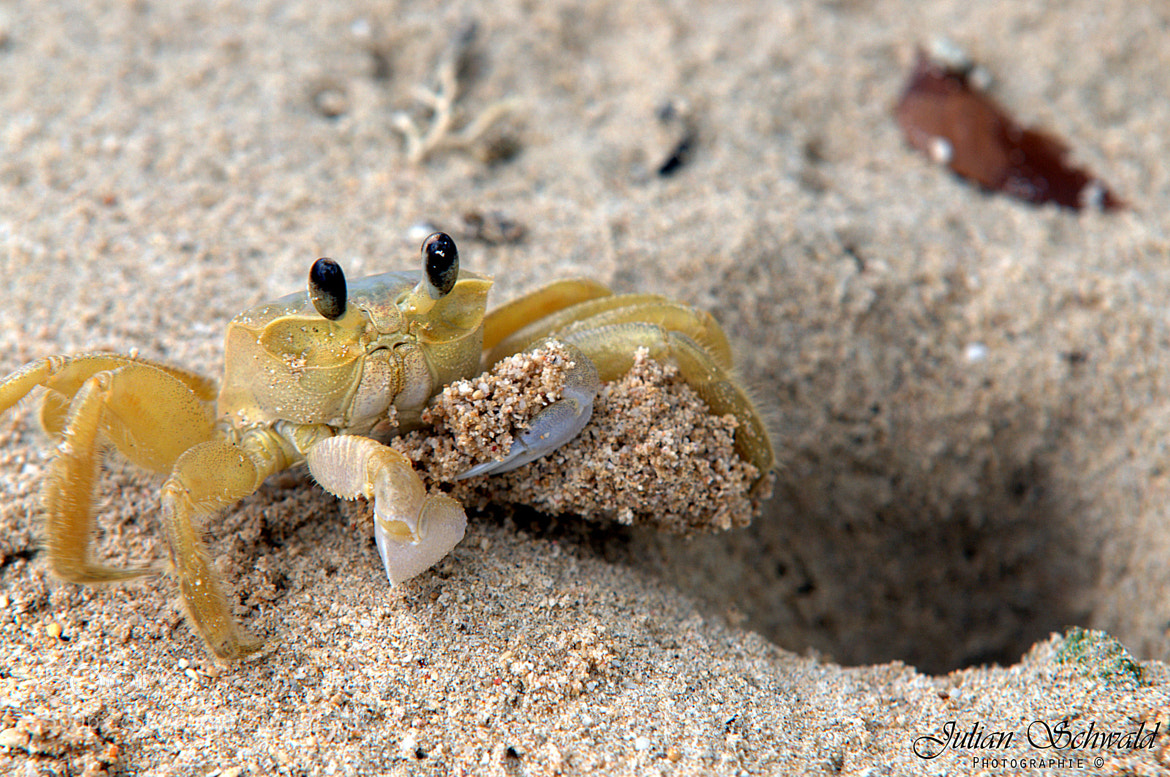 Photograph Little Crab by Julian Schwald on 500px