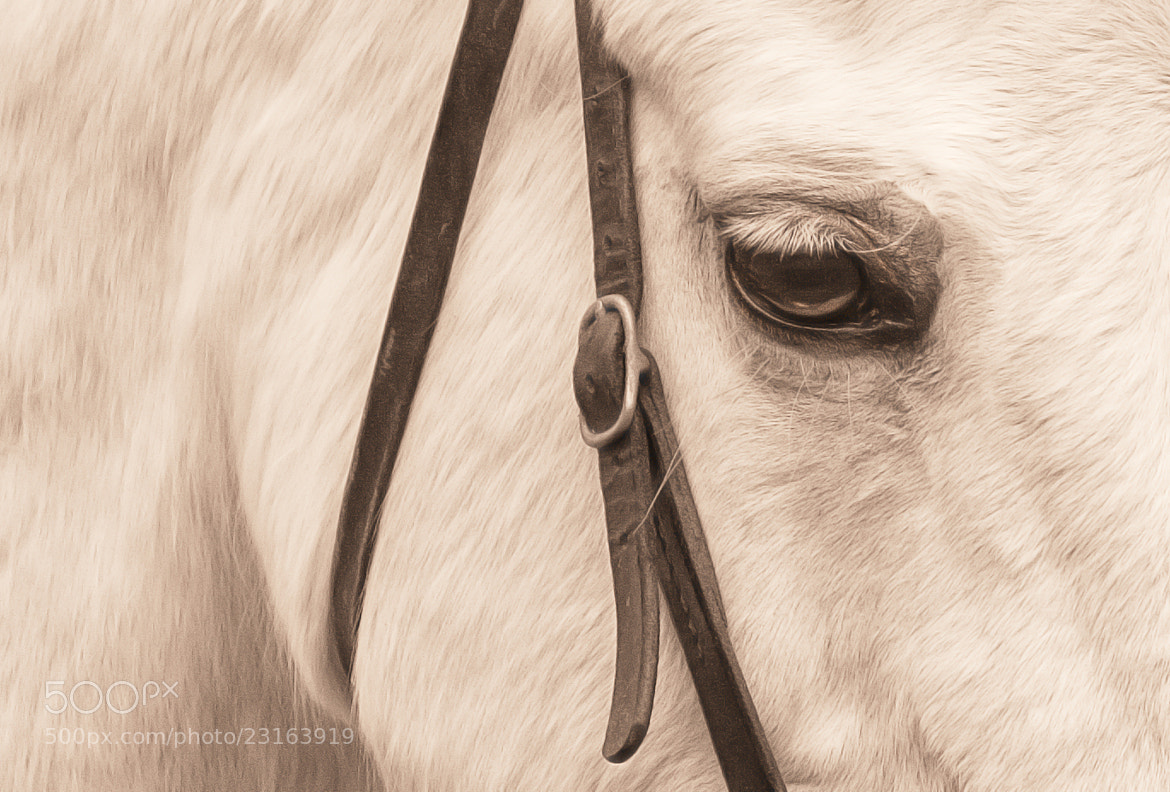 Photograph Horse by Denis Van Linden on 500px
