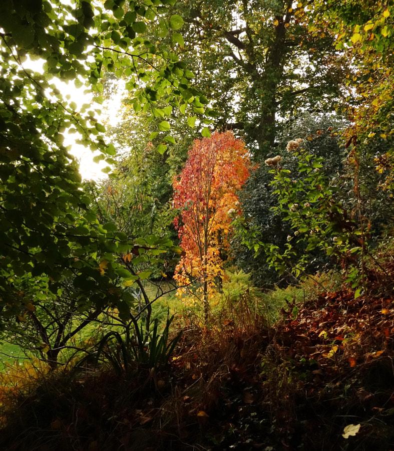 Arundel Park, UK by Sandra on 500px.com