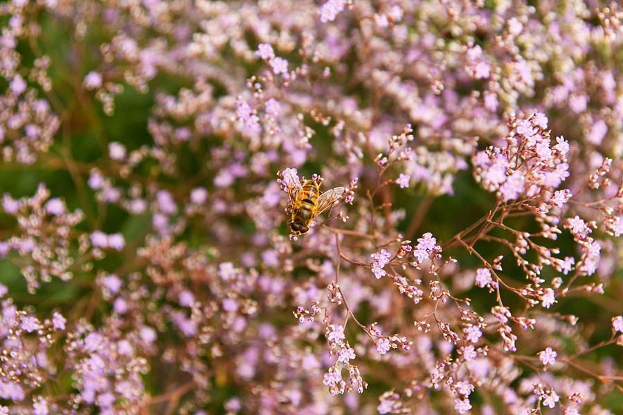 Photograph Bee by Tania Labenko on 500px