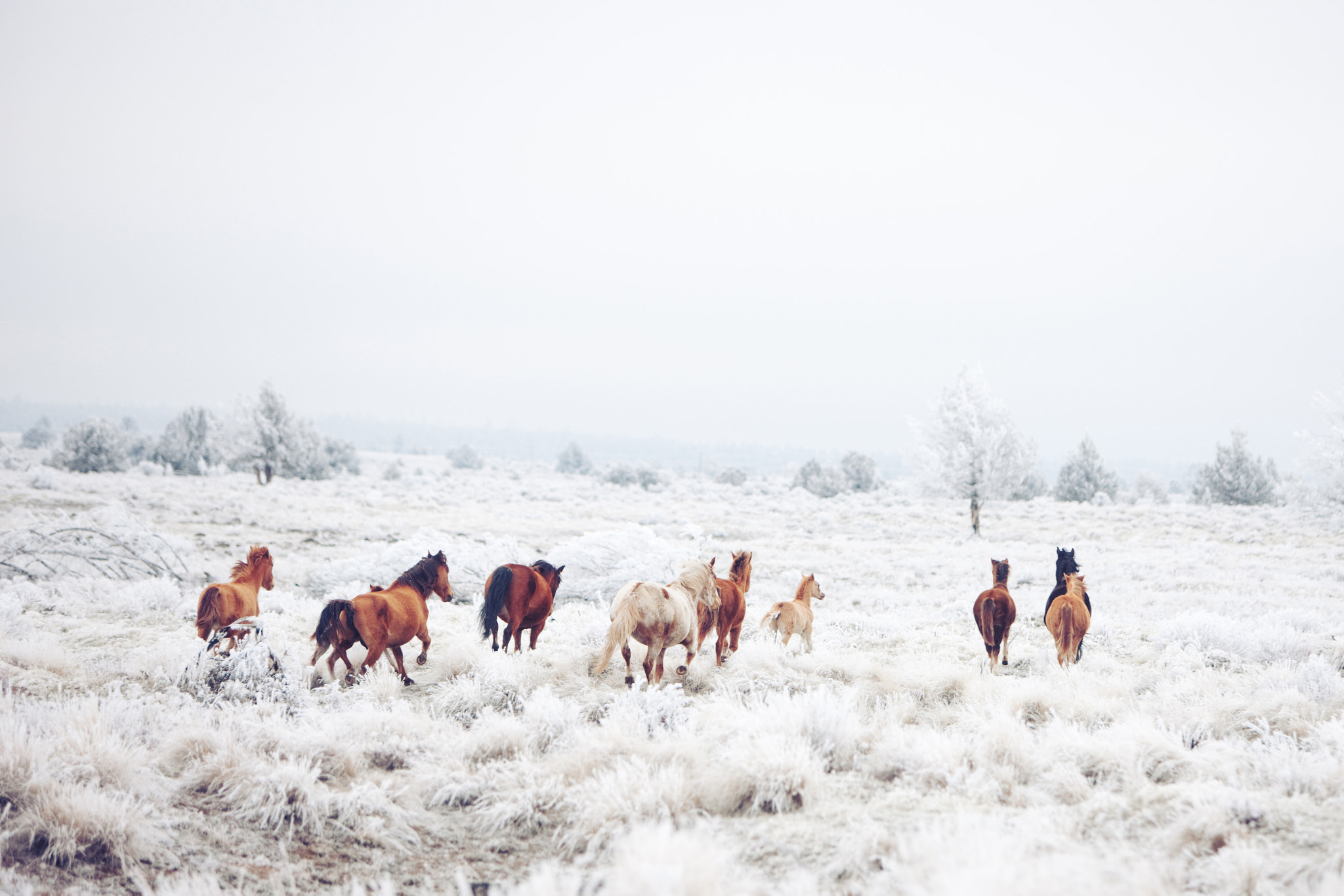 Photograph Winter Horse Run by Kevin Russ on 500px