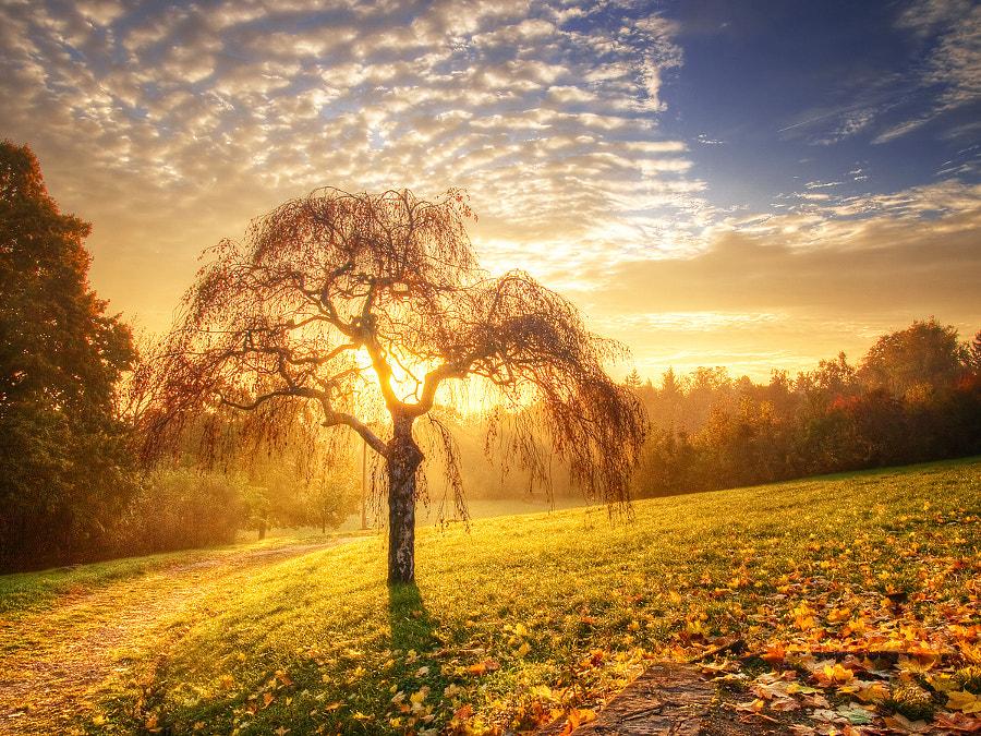 Rebirth I., автор — Zsolt Zsigmond на 500px.com