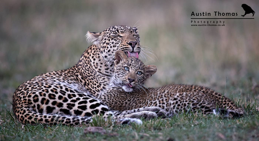 Please mum. Stop licking my head...