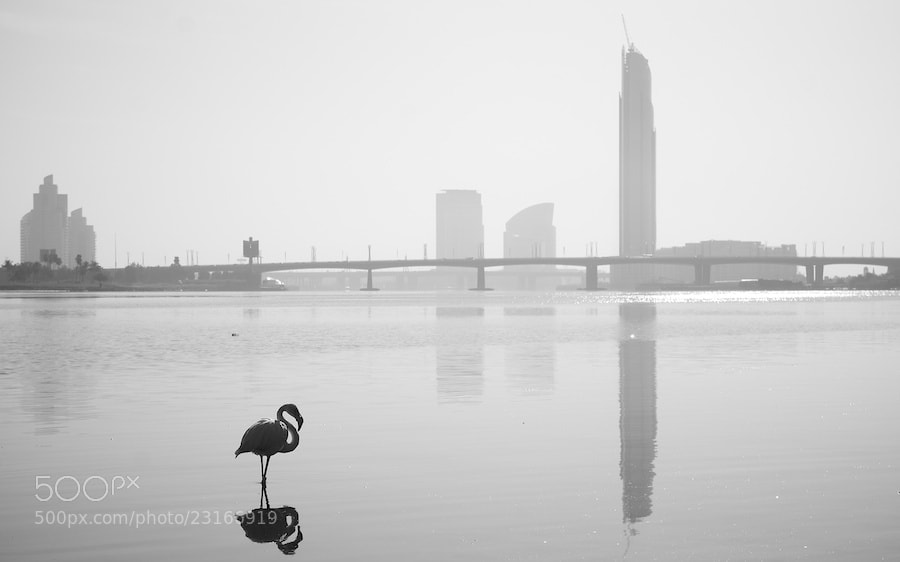 Photograph Lonely Flamingo in a City of Skyscrapers by Sean Cheng on 500px