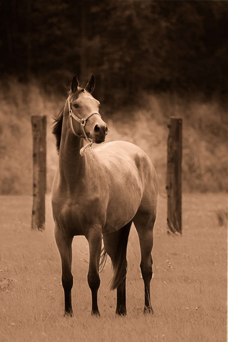 Photograph Horse II by Denis Van Linden on 500px