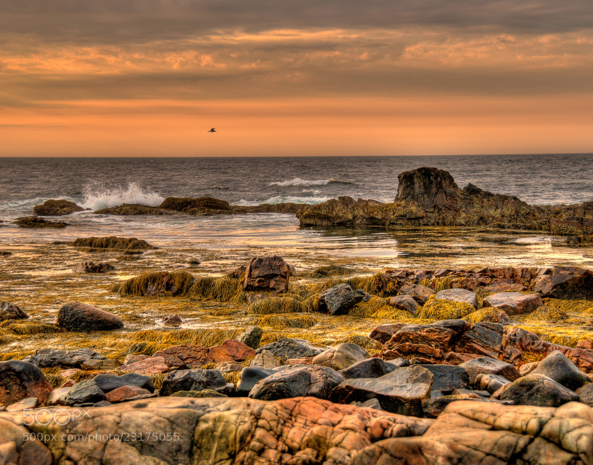 Photograph Washed by the Sea by Dennis Brown on 500px