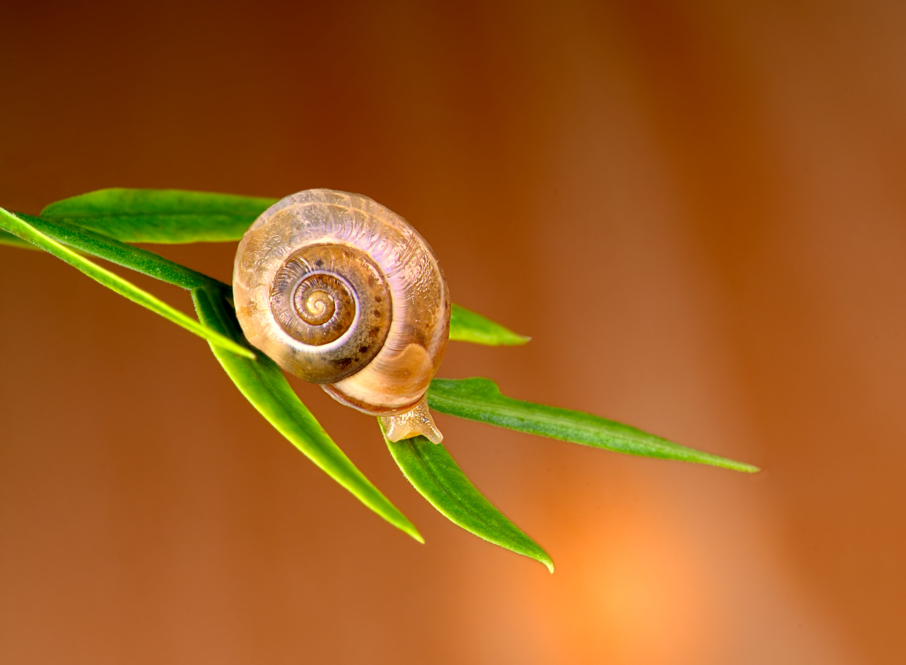 Photograph Shy Snail by Charles Charalambous on 500px