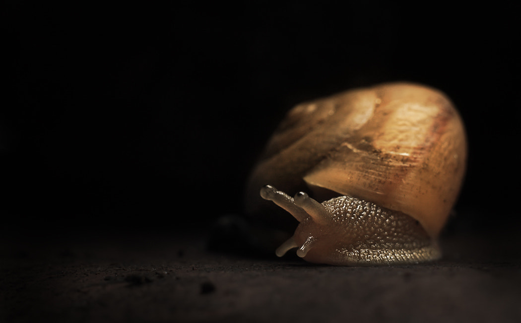 Photograph Helix Aspersa by Marcel Rodrigues on 500px