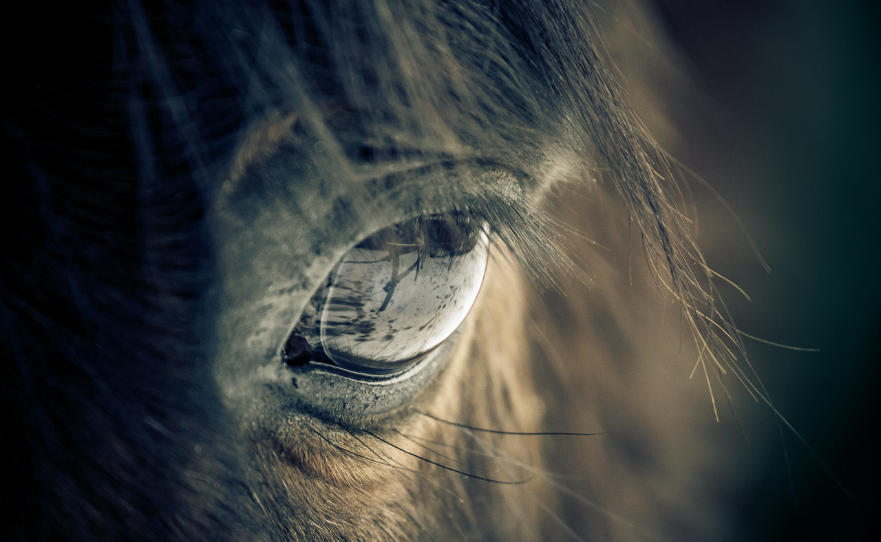 Photograph Within the black of the eye by Kristian Pettersen on 500px