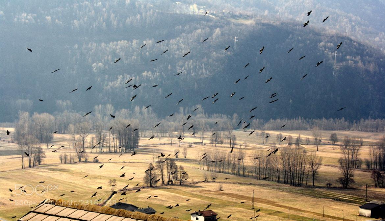 Photograph Air attack by Daniela Balgera on 500px