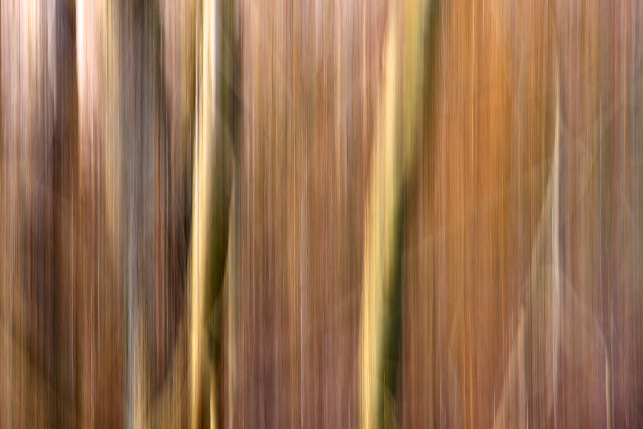 Photograph Tree Movement #2 by Andrew Russell on 500px