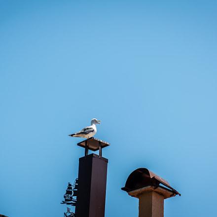 Sea Bird on the Chimney