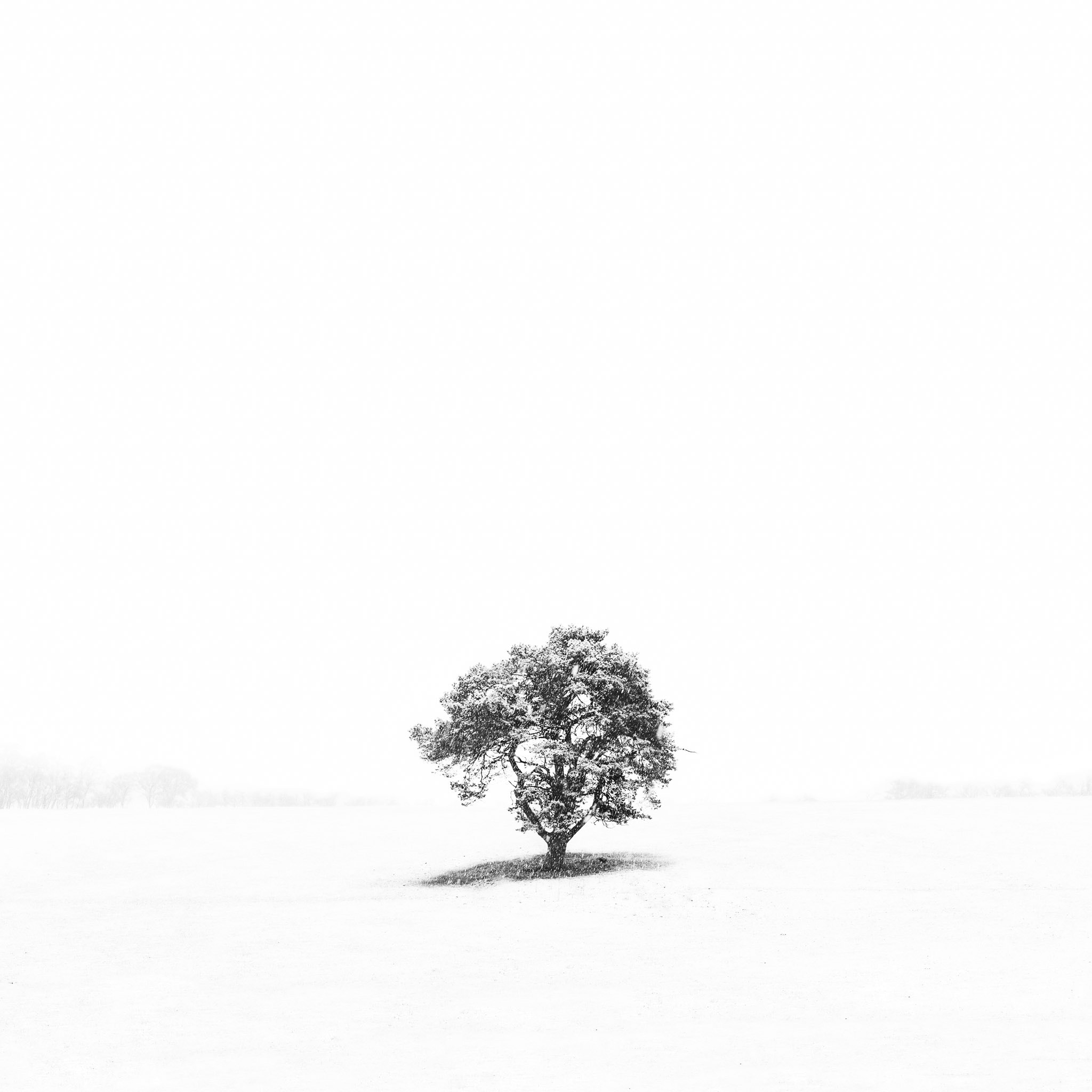 Photograph Snow Tree by Andy Gray on 500px