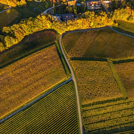 Flying on the vineyard