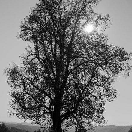 People enjoyig the autum sun under a tree