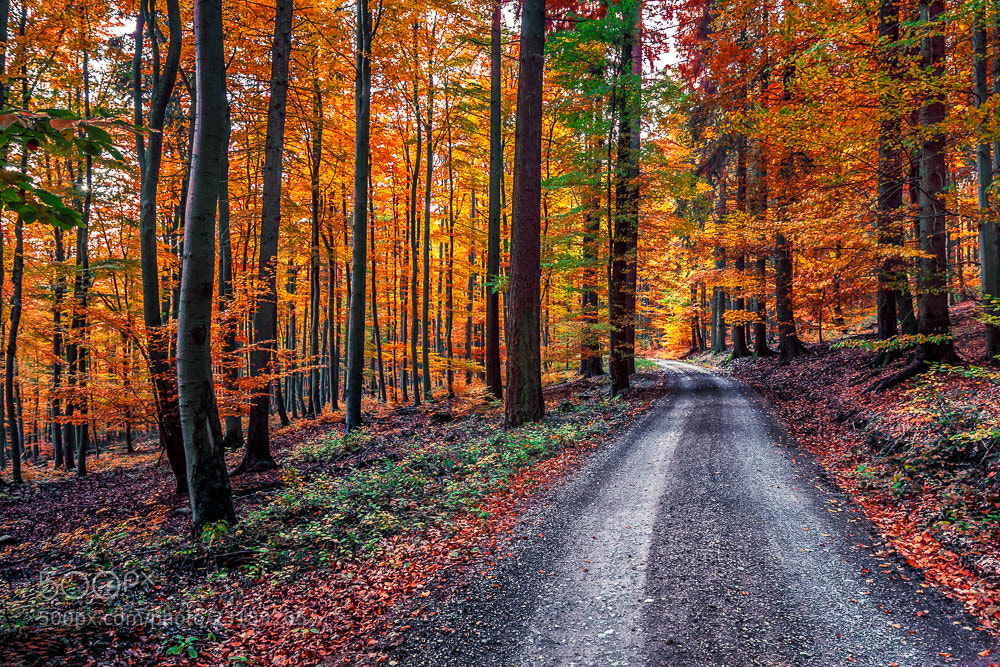 Photograph magic forest 3 by Nadim  Khalil on 500px