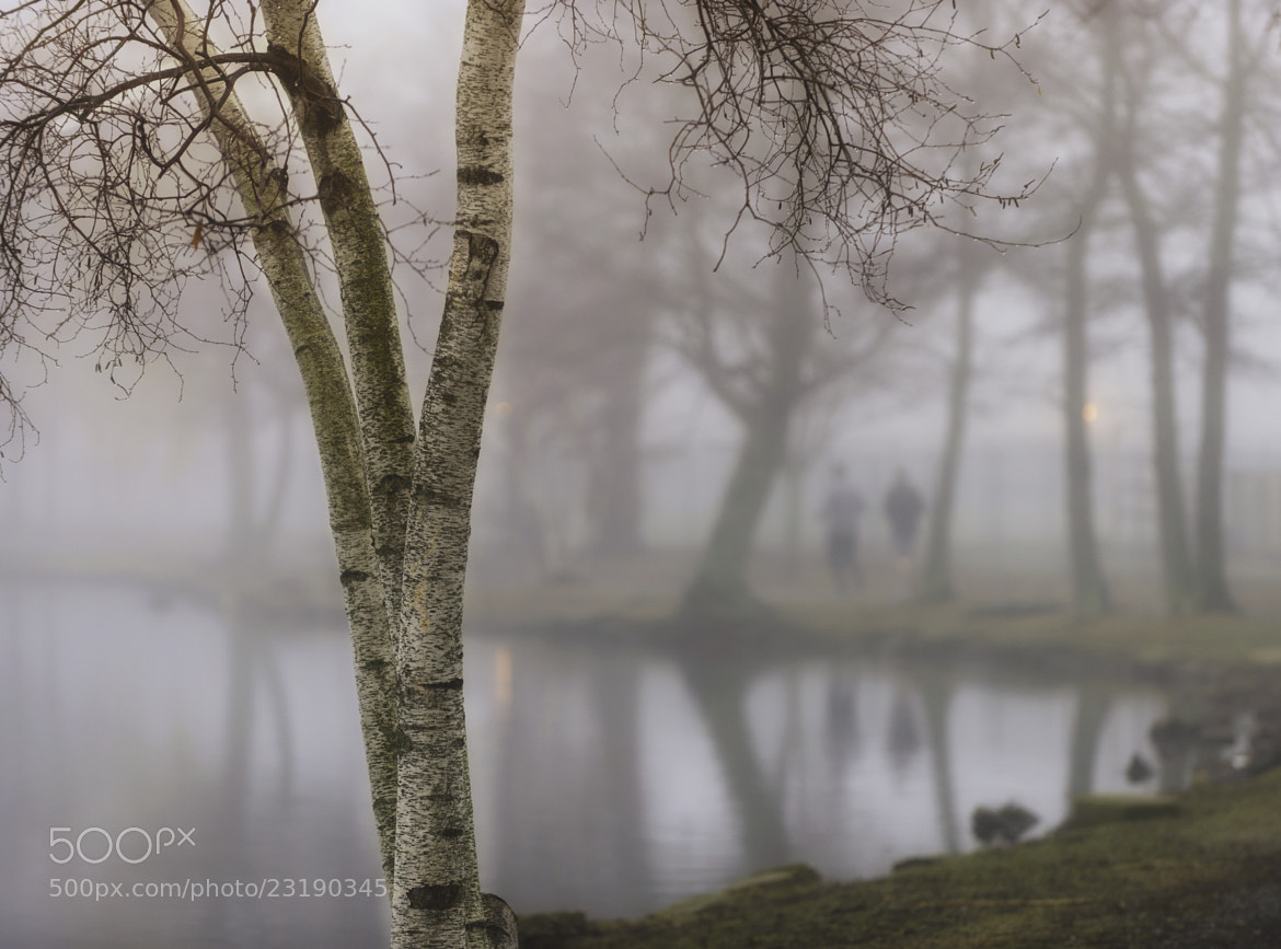 Photograph A Jog in the Fog by Vicki Jauron on 500px