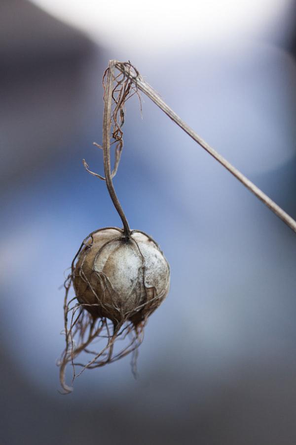 Le grelot ( The little spherical bell) de Christine Druesne sur 500px.com