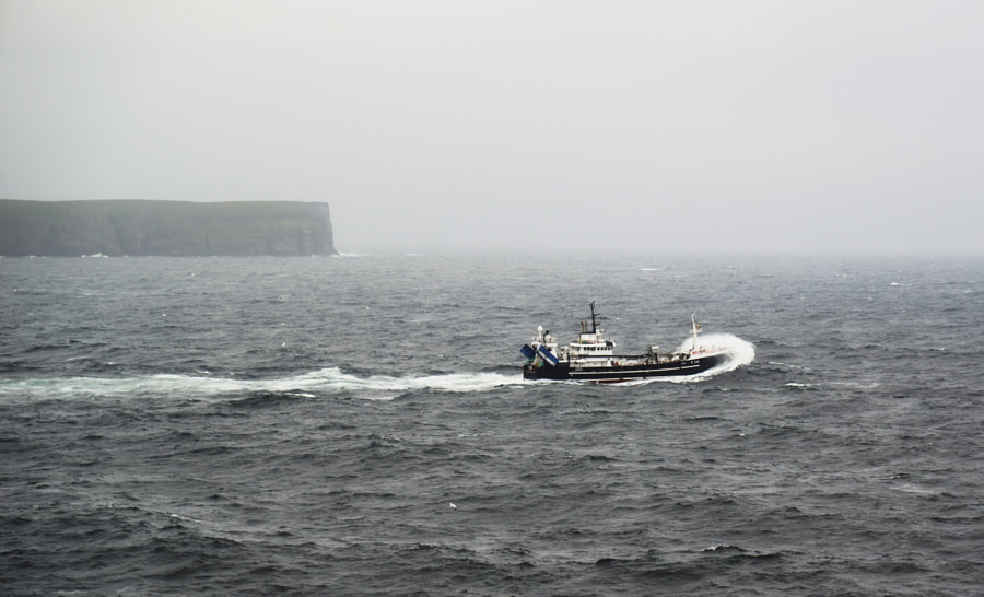 Shetland XX