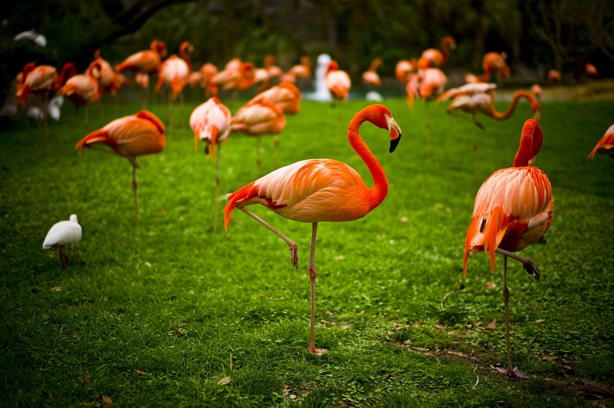 Photograph Flamingo by p z on 500px