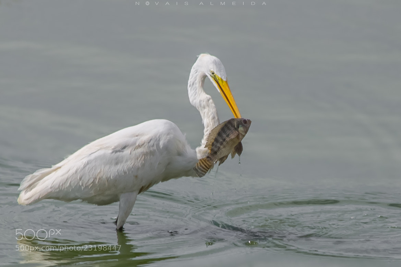 Photograph Pescado by Novais Almeida on 500px