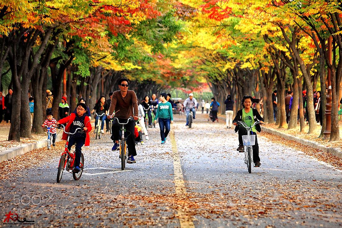 Photograph Autumn park road by kim seong-geun on 500px