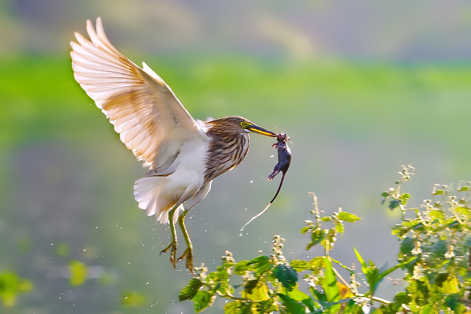 Photograph Unusual  Catch by Nitin  Prabhudesai on 500px