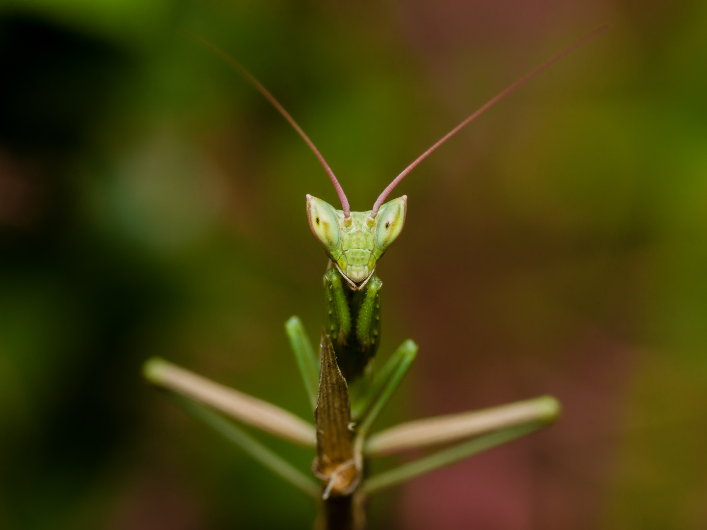 Photograph Mantis Symmetry by Andres Gutierrez on 500px