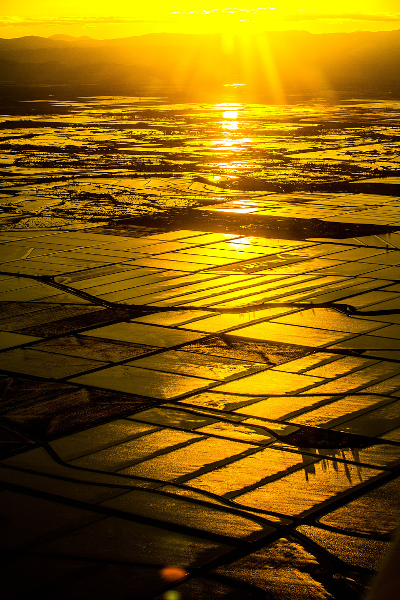 Photograph Rice Field in Sunset by Vassili Broutski on 500px
