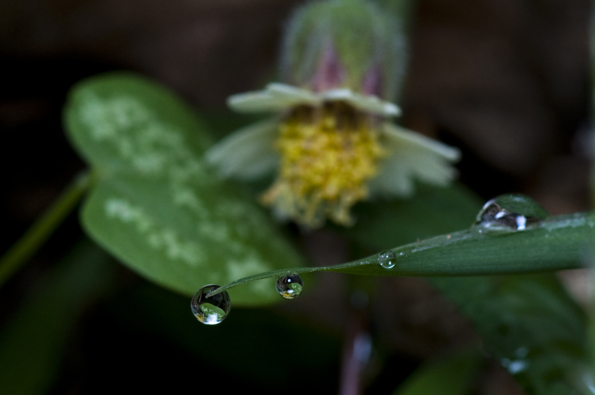 Photograph Dew by Cesar Samiano on 500px