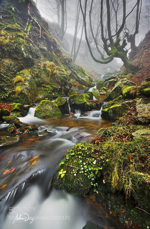 Photograph Forest liquor by Alonso Díaz on 500px