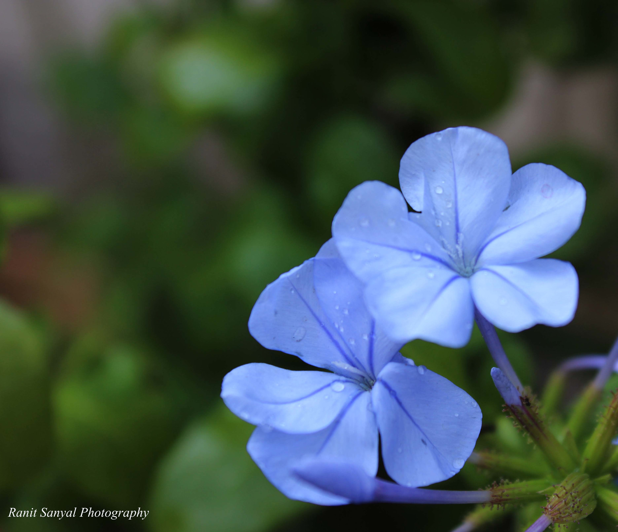 Photograph Soothing Blue by Ranit sanyal on 500px