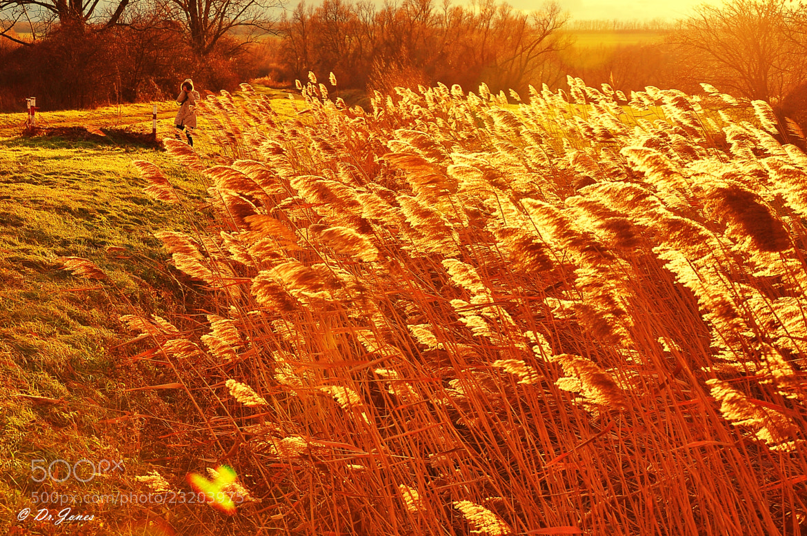 Photograph Fields of gold by János Kovács on 500px