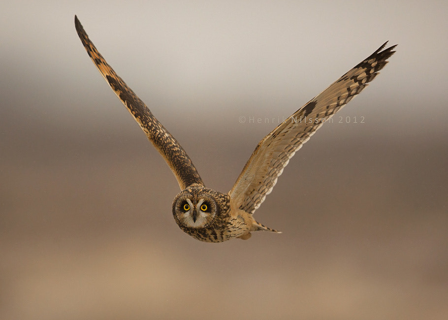 Photograph The Hunter by Henrik Nilsson on 500px