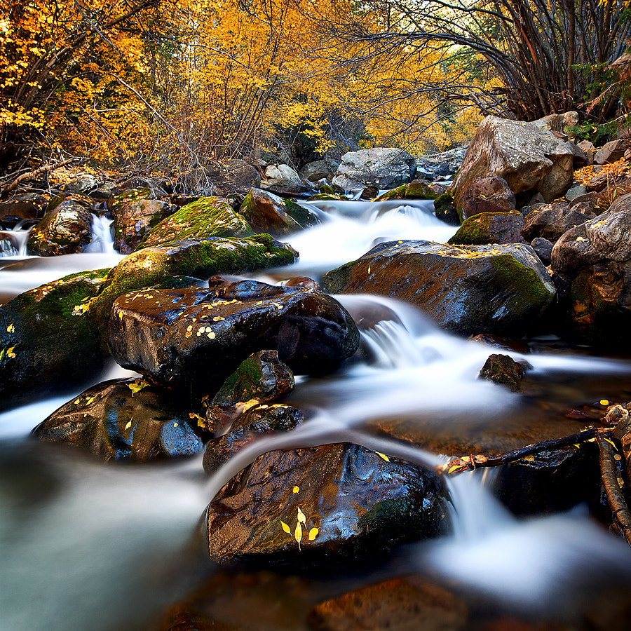 Big Cottonwood Canyon in Fall
