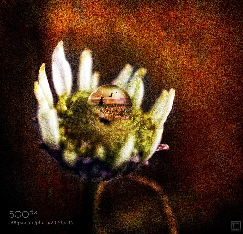 Photograph En attendant le printemps by Lisabella Fert on 500px
