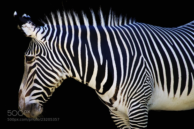 Photograph Stripes by Peter Milota, Jr. on 500px