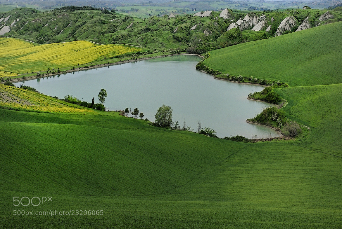 Photograph Leonina by mauro maione on 500px