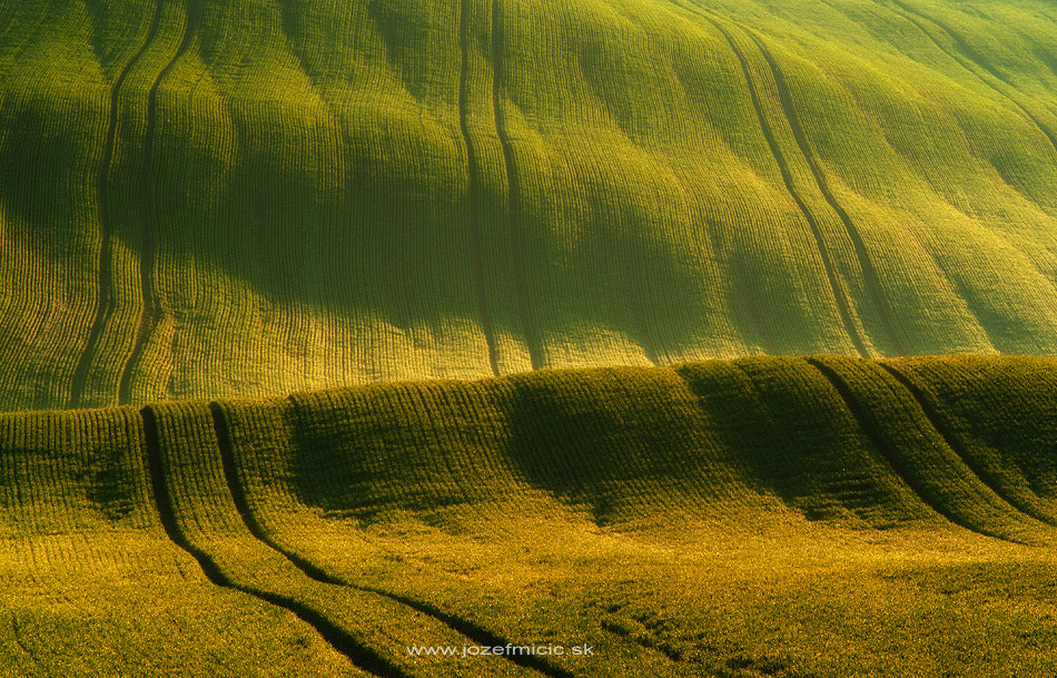 Photograph Fields of gold by Jozef Micic on 500px