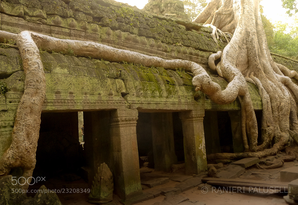 Photograph angkor by ranieripaluselli on 500px