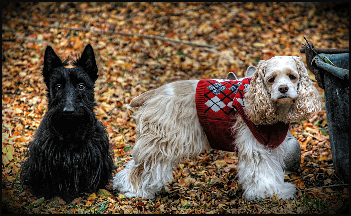 Photograph Two Good Dogs by Dave Gillenwater on 500px
