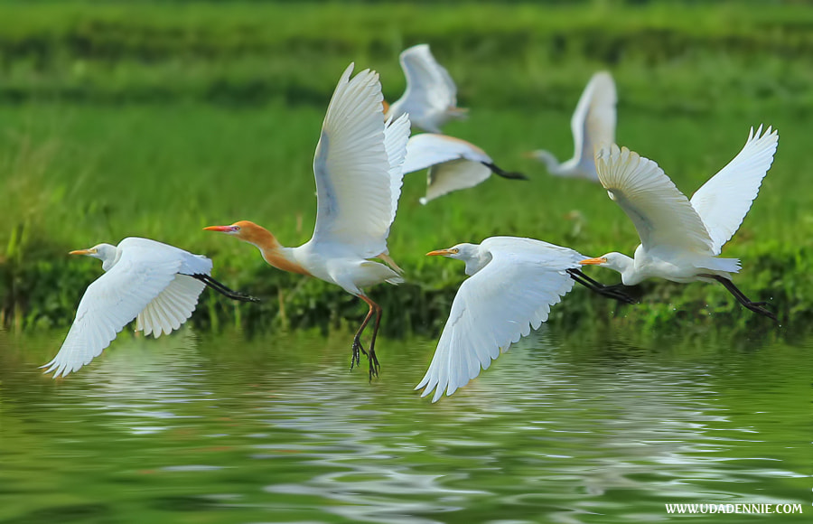 Photograph fly on the water by Uda Dennie on 500px