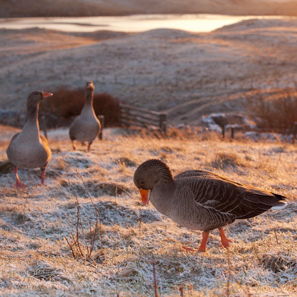 Photograph pretty at dawn by dominique walterson on 500px