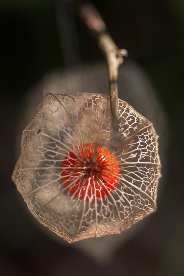 La boule rouge (the red ball) de Christine Druesne sur 500px.com