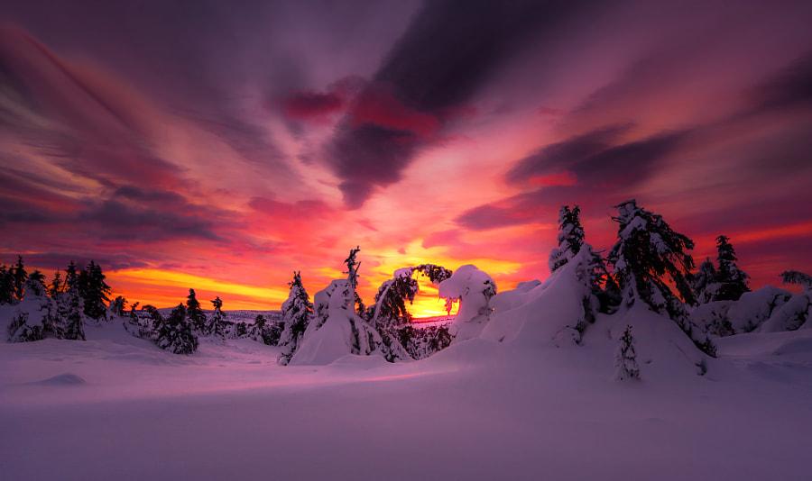 Morning eye by Jørn Allan Pedersen